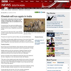 Cheetah will run again in India