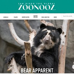 Bear Apparent – ZOONOOZ