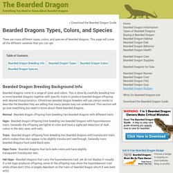 Types of Bearded Dragons » Learn Different Types, Colors, & Species