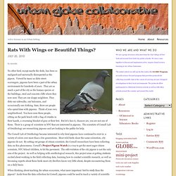 Rats With Wings or Beautiful Things? « GLOBE Alliance Collaborative