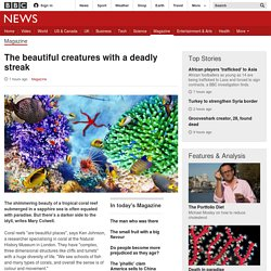 The beautiful creatures with a deadly streak - BBC News