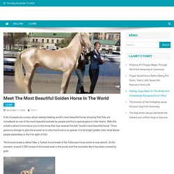 Meet The Most beautiful golden horse in the world