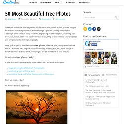 50 Most Beautiful Tree Photos | CreativeFan