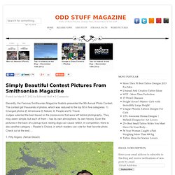 Simply Beautiful Contest Pictures From Smithsonian Magazine