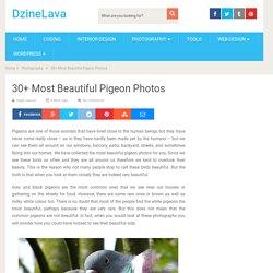 30+ Most Beautiful Pigeon Photos – DzineLava