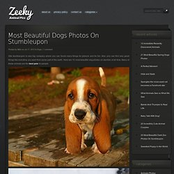 Most Beautiful Dogs Photos On Stumbleupon