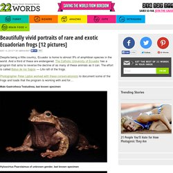 Beautifully vivid portraits of rare and exotic Ecuadorian frogs [12 pictures]