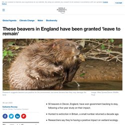 These beavers in England have been granted 'leave to remain'