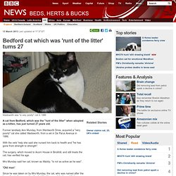 Bedford cat which was 'runt of the litter' turns 27