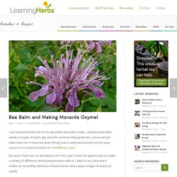 Bee balm and Monarda Oxymel