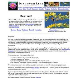Discover Life