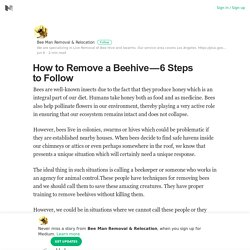 How to Remove a Beehive - 6 Steps to Follow