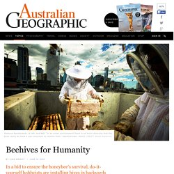 Beehives for humanity