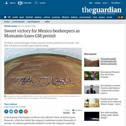 Sweet victory for Mexico beekeepers as Monsanto loses GM permit
