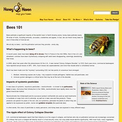 Honey Bee Haven