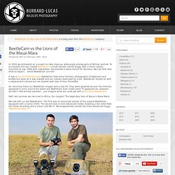 Blog » BeetleCam vs the Lions of the Masai Mara