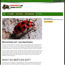 What Do Beetles Eat? - Facts About Beetles - Types Of Insects