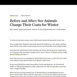 Before and After: See Animals Change Their Coats for Winter
