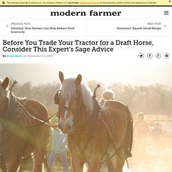 Before You Trade Your Tractor for a Draft Horse, Consider This Expert's Sage Advice