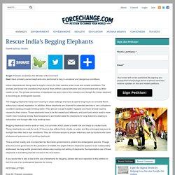Rescue India's Begging Elephants