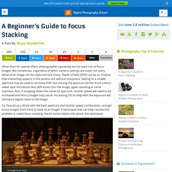 A Beginner's Guide to Focus Stacking