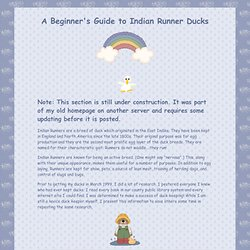 Beginner's Guide to Indian Runner Ducks