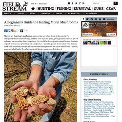 A Beginner's Guide to Hunting Morel Mushrooms