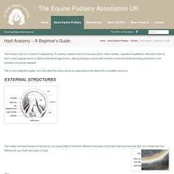 Hoof Anatomy – A Beginner's Guide – The Equine Podiatry Association