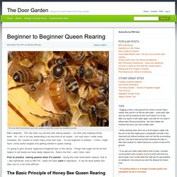 Beginner to Beginner Queen Rearing