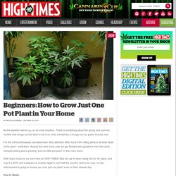 Beginners: How to Grow Just One Pot Plant in Your Home