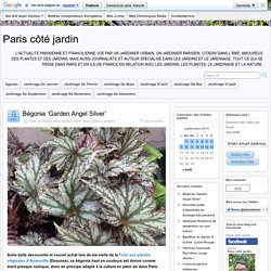 Bégonia 'Garden Angel Silver'