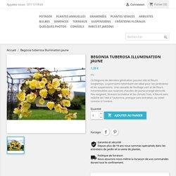 Begonia tuberosa Illumination jaune