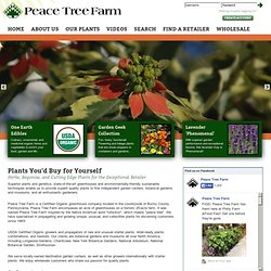 Herbs, Begonias, Starter Plants & Perennials From Peace Tree Farm