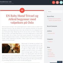 valpekurs på Oslo handler om undervisning Puppy å spille med alle