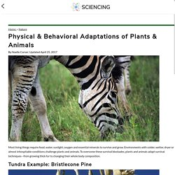 Physical & Behavioral Adaptations of Plants & Animals