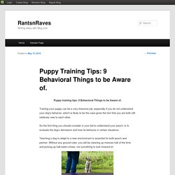 Puppy Training Tips: 9 Behavioral Things to be Aware of.