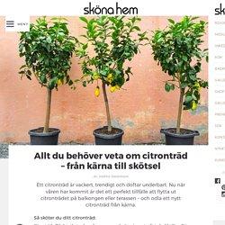 Allt du behöver veta om citronträd – från kärna till skötsel – Sköna hem