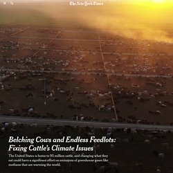 Belching Cows and Endless Feedlots: Fixing Cattle's Climate Issues