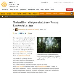The World Lost a Belgium-sized Area of Primary Rainforests Last Year