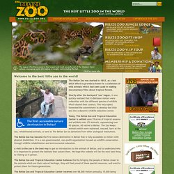 Tropical Zoo, educational tours, Belize!