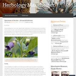 Specimen of the day – Atropa belladonna « Herbology Manchester