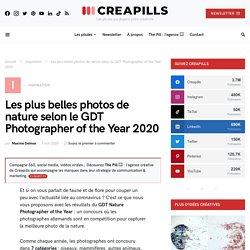 Les plus belles photos de nature selon le GDT Photographer of the Year 2020