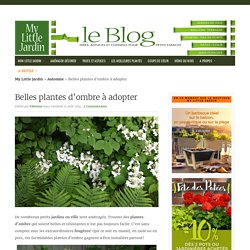 Belles plantes d'ombre à adopter - My Little Jardin My Little Jardin