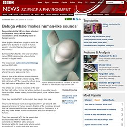 Beluga whale 'makes human-like sounds'