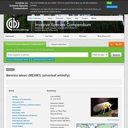 CABI 21/07/16 Bemisia tabaci (MEAM1) (silverleaf whitefly)