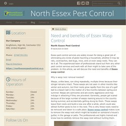 Need and benefits of Essex Wasp Control - North Essex Pest Control : powered by Doodlekit