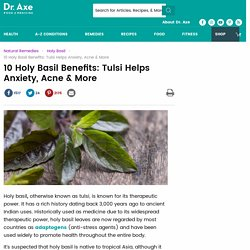 Holy Basil Benefits Cortisol Levels and Reduces Anxiety