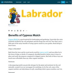 Benefits of Cypress Mulch: labradorls