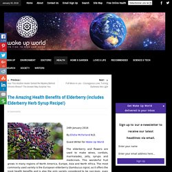 The Amazing Health Benefits of Elderberry (includes Elderberry Syrup Recipe!)