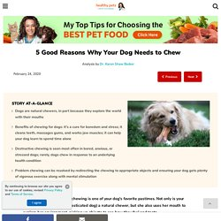 Benefits of Chewing for Dogs